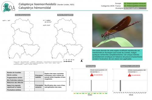 Calopteryx-haemorrhoidalis